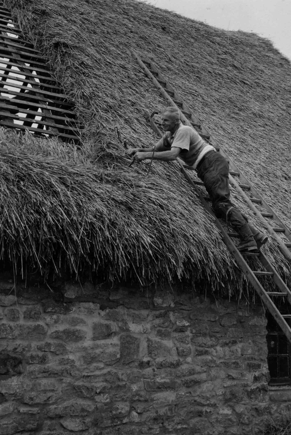 Willey thatching MH